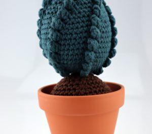 kaktus z bąbelkami