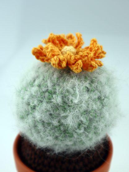 kwitnący kaktus - kudłata kulka