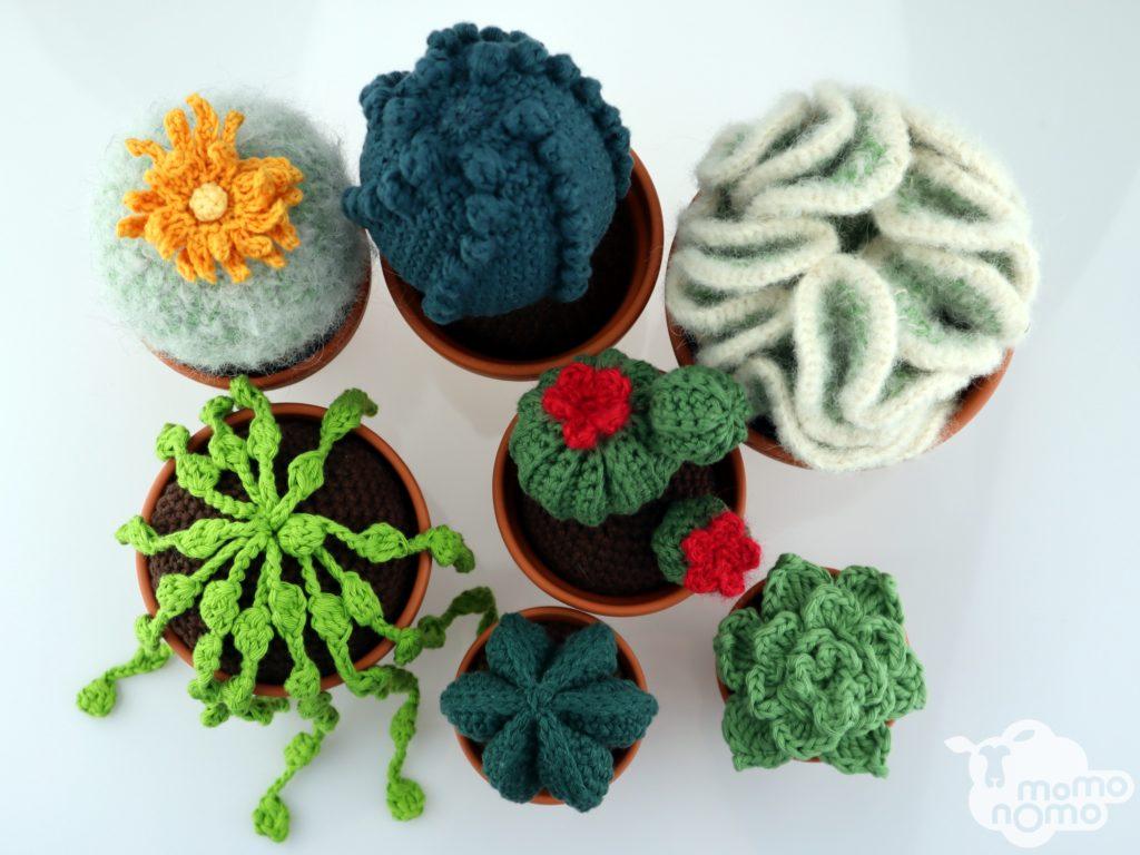 kaktusy kwitnące i inne sukulenty ręcznie wykonane dekoracje