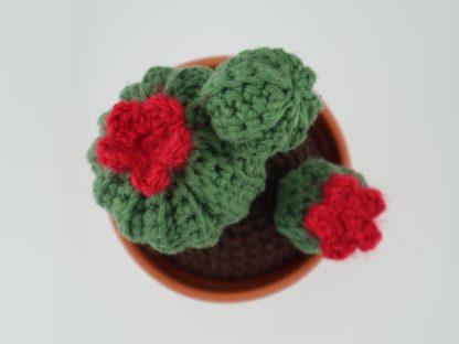 kaktusy z pracowni momonomo kwitną cały rok bez podlewania