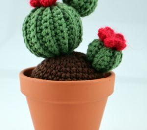 kwitnący kaktus doniczkowy
